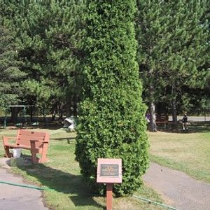 Existing Tree Planting Memorial
